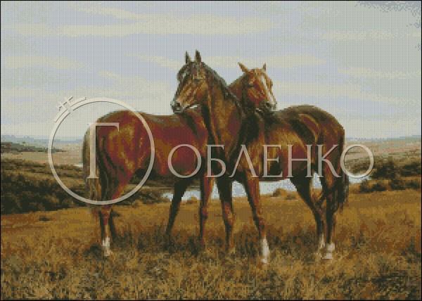Арабски коне